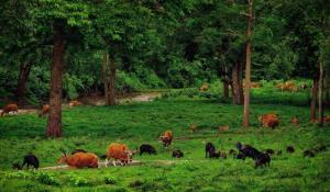 ตื่นตา! ทั้งวัวแดง-หมูป่านับร้อย ยันเก้งกวาง-นกยูง เริงร่าหากินลานโป่งช้างเผือกรอยต่อนครสวรรค์-ห้วยขาแข้ง