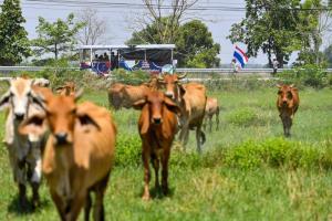 วิ่งธงชาติไทยวันที่ 42 พิชิตภารกิจสุดโหด 106.2 กม.