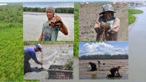 """10 พ.ค. """"วันป่าชายเลนแห่งชาติ"""" ซีพีเอฟร่วมอนุรักษ์และฟื้นฟูป่า ดูแลสังคม-สิ่งแวดล้อมยั่งยืน"""