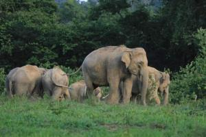 เที่ยวทิพย์! ชมช้างป่าอุทยานแห่งชาติกุยบุรี