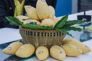 โกอินเตอร์! มะม่วงน้ำดอกไม้สระแก้วพร้อมลุยตลาดฮ่องกง หลังคู่ค้า 2 ประเทศลงนามซื้อขาย