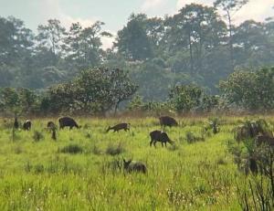 เที่ยวทิพย์ ชมสัตว์ป่าเริงร่าในทุ่งสะวันนาแห่งเมืองไทย