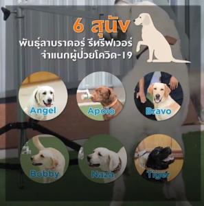 วิธีใหม่ สุนัขดมกลิ่นค้นหาคนมีเชื้อโควิด ใช้จริงแล้ว ด้วยอาสาสมัครลงตรวจคนไข้ติดเตียง เขตมีนบุรี!!!