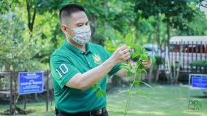 ทส. หนุน ปม. ชวนคนไทยปลูกต้นไม้เพิ่ม