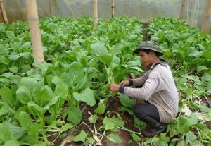 สวพส. เผยแนวทางที่เหมาะสมในการปลูกพืชผักคุณภาพบนพื้นที่สูงและเป็นมิตรต่อสิ่งแวดล้อม