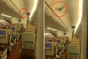 ยิ่งกลัวโควิดอยู่! แตกตื่น ค้างคาวบินว่อนห้องโดยสารเที่ยวบินจากอินเดียสู่สหรัฐฯ ต้องลงจอดฉุกเฉิน (ชมคลิป)