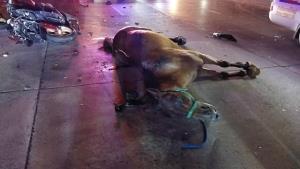 แก๊งซิ่งชนรวด 4 คันดับ 2 รายบาดเจ็บ 2 ราย ม้าตายอีก 1 ตัว
