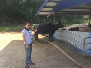 """นมควายไม่น่ากลัวอย่างที่คิดกับ """"มูร่าห์ฟาร์ม"""" แห่งแรกในไทยเปิดมานาน 16 ปี!"""