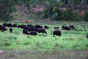 """ส่องสัตว์ """"อช.กุยบุรี"""" ซาฟารีเมืองไทย ต้องป้องกันโควิด-19 อย่างเคร่งครัด"""