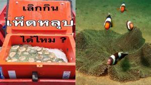 """ดร.ธรณ์ วอนคนไทย หยุดทาน """"เห็ดหลุบ"""" เพราะคือบ้านของสัตว์ทะเลและผิดกฎหมาย"""