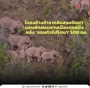 (ชมคลิป) ปริศนา 'ช้างป่าจีนเดินทัพทางไกล' ชาวจีนกำลัง 'อิน' ข่าว 'ช้างป่าออนทัวร์' (ตอน 1)
