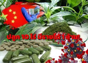 ชูแผนพัฒนาฟ้าทะลายโจร 'Flagship Product of Thailand'!