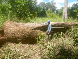 สหรัฐฯ ประกาศยุติโครงการช่วยเหลือกัมพูชา เหตุยังพบตัดไม้ทำลายป่า-โจมตีนักเคลื่อนไหวต่อเนื่อง