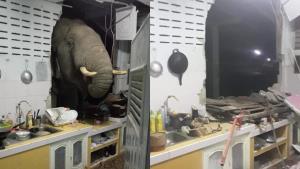 """อุทยานฯ เร่งเยียวยา หลังพบภาพ """"ช้างป่า"""" ตัวโตบุกพังครัวชาวบ้าน ชี้เกิดจากได้กลิ่นอาหาร"""