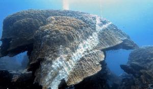 """""""ดร.ธรณ์"""" อุ่นใจ ปะการังโลซินยังพอมีทางรอด หวังเป็นอุทาหรณ์คนรักทะเลช่วยกันดูแล"""