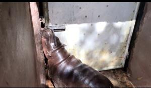 ภาพจากบางส่วนของคลิปจากเพจขาหมู แอนด์เดอะแก๊ง