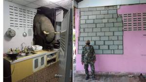 """เจ้าหน้าที่ลงพื้นที่ซ่อมแซมบ้านเรือนประชาชนที่ถูก """"ช้างป่า"""" บุกพังครัวเรียบร้อยแล้ว"""