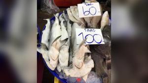 สุดเศร้า! ดร.ธรณ์เผยภาพลูกฉลามหัวค้อน ถูกจับขายโลละร้อย เกลื่อนตลาดใกล้กรุง