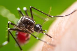 มากกว่าโควิด-19  ยังมีโรคไข้เลือดออกแพร่ระบาดในหน้าฝน แพทย์เตือนภัยประชาชนร่วมมือป้องกันโรคติดเชื้อไวรัสเดงกี