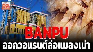 BANPU ออกวอร์แรนต์ล่อแมลงเม่า / สุนันท์ ศรีจันทรา