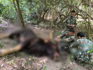 พบกระทิงหนุ่ม น้ำหนักประมาณ 1,500 กิโลกรัม ตายในผืนป่าแก่งกระจาน