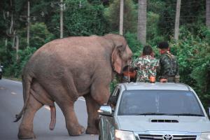 """เราคือเพื่อนกัน...""""คน-ช้างป่า"""" แก่งกระจาน อยู่อย่างเข้าใจ ในวันที่พี่ใหญ่มาเยี่ยมไม่ต่างจากญาติสนิท"""