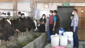 ปศุสัตว์สระบุรีเร่งฉีดวัคซีน พ่นยาฆ่าเชื้อป้องกันโรคลัมปีสกิน