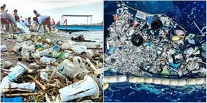 ทำไม! นกและปลา กินพลาสติก