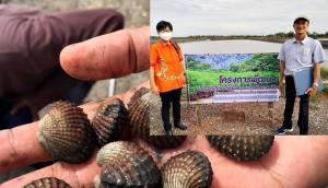 วช. เสริม ม.บูรพา เลี้ยงหอยแครงระบบปิดด้วยแพลงก์ตอนพืช เกษตรกรปลื้ม หอยแครงโตเต็มที่