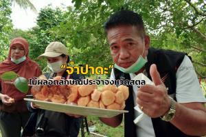 """เชิญชวนสาวกทั่วไทยบริโภค """"จำปาดะ"""" ไม้ผลอัตลักษณ์สินค้า GI ประจำจังหวัดสตูล"""