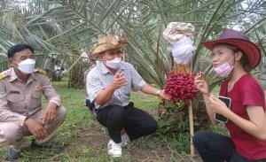 """กันอนาคตราคาร่วง! ชาวสวนเริ่มปั้นจุดขาย """"สวนอินทผลัม"""" พบมีทั้งทำส้มตำ-พัฒนาสายพันธุ์ไทย"""