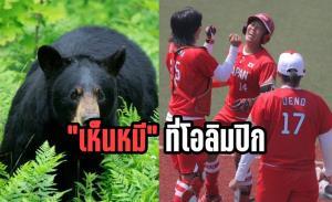 """ตำรวจตะลึง!! """"เห็นหมี"""" บุกสนามซอฟต์บอลโอลิมปิก"""