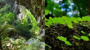 อุทยานฯ เฉลิมรัตนโกสินทร์ อวดภาพความสวยงามเส้นทางศึกษาธรรมชาติถ้ำธารลอด