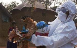 อินเดียส่องานเข้าอีก! พบผู้เสียชีวิตจากไข้หวัดนก H5N1 รายแรกของประเทศ