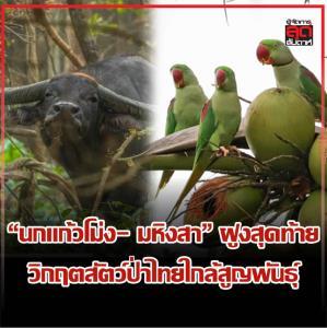 """""""นกแก้วโม่ง- มหิงสา"""" ฝูงสุดท้าย วิกฤตสัตว์ป่าไทยใกล้สูญพันธุ์"""