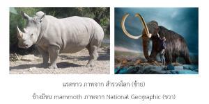 สาเหตุการสูญพันธุ์ของสัตว์บกขนาดใหญ่ที่อาศัยอยู่บนเกาะ