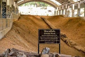 ไทยเตรียมบันทึกใน Guinness World Record ไม้กลายเป็นหินที่ดอยสอยมาลัย ยาวที่สุดในโลก