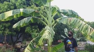"""น่าทึ่ง! """"ครูเกษียณ"""" สะสมไม้ด่าง 40 ปี มีสารพัดทั้งกล้วย ส้ม ละมุด ฝรั่ง ยันวัชพืชด่าง"""