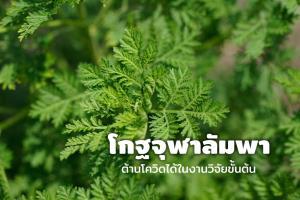 โกฐจุฬาลัมพา (ภาพจาก maison-artemisia.org)