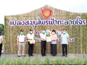 """ราชทัณฑ์จับมือแพทย์แผนไทยสร้างคลังยา """"ฟ้าทะลายโจร"""" ฝ่าทางรอดโควิด"""