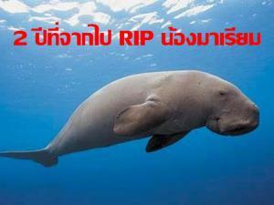 """วันอนุรักษ์พะยูนแห่งชาติ ทะเลไทยเหลือแค่ 261 ตัว! 'วราวุธ' โพสต์รำลึก """"น้องมาเรียม"""" เร่งประกาศพื้นที่คุ้มครองทะเลตรัง"""
