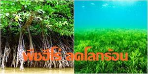 """เอสซีจี เดินหน้าอนุรักษ์ต้นไม้ """"พืชฮีโร่ช่วยลดโลกร้อน"""" จาก """"ไม้พื้นถิ่น"""" สู่ """"ป่าโกงกาง"""" ต่อยอดสู่ """"หญ้าทะเล"""""""