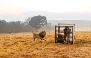 """เปิดประสบการณ์ใหม่ในการชมสัตว์ที่แอฟริกา """"คนอยู่ในกรง-สัตว์อยู่ข้างนอก"""""""