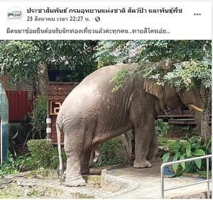 พลายเดี่ยวจองแท่น! ช้างอาสาซ้อมต้อนรับนักท่องเที่ยว