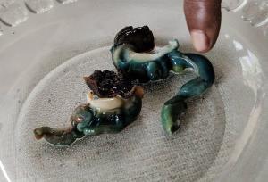 อึ้ง! พบไข่มุกดำในหอยสันขวาน ไม่สามารถประเมินค่าได้