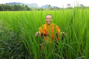 'ม.ทักษิณ' ขับเคลื่อนกลุ่มผลิตข้าวอินทรีย์ พลิกผืนนาเมืองลุงกว่า 800 ไร่ ผ่านมาตรฐาน Organic Thailand