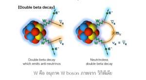 การค้นหาอนุภาค Majorana neutrino เพื่อใช้อธิบายเหตุผลที่เอกภพมีสสารมากกว่าปฏิสสาร