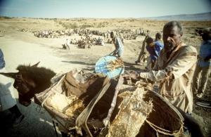 วิกฤตภัยแล้งในเอธิโอเปีย เมื่อปี 1983
