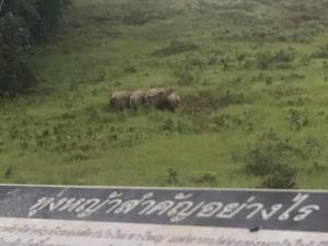 ชมช้างลงกินโป่งทุ่งกวาง! ท่ามกลางบรรยากาศฟ้าหลังฝนบนเขาใหญ่