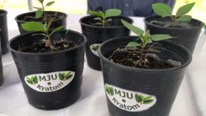 """ม.แม่โจ้ลุยโครงการวิจัยพัฒนาปลูก """"ต้นกระท่อม"""" ครบวงจร มุ่งต่อยอดพืช ศก.แห่งอนาคตตามนโยบายรัฐบาล"""